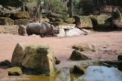 Zoo_Hannover_100415_IMG_2902