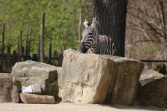 Zoo_Hannover_100415_IMG_2917