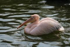 Zoo_Hannover_100415_IMG_2918