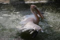 Zoo_Hannover_100415_IMG_2930