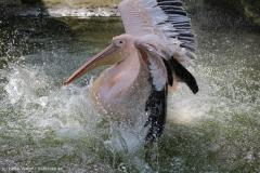 Zoo_Hannover_100415_IMG_2942