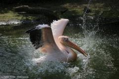 Zoo_Hannover_100415_IMG_2970