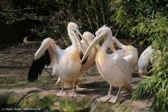Zoo_Hannover_100415_IMG_2984