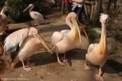 Zoo_Hannover_100415_IMG_2988_9403