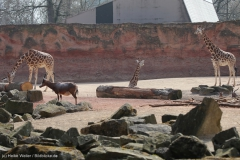 Zoo_Hannover_100415_IMG_3034