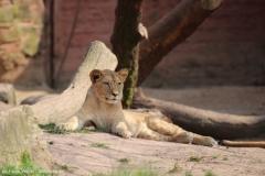 Zoo_Hannover_100415_IMG_3037