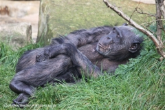 Zoo_Hannover_101014_copy_Heike_Weiler_IMG_7925
