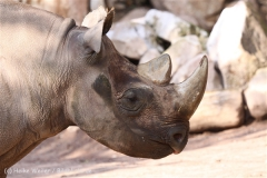 Zoo_Hannover_101014_copy_Heike_Weiler_IMG_7931