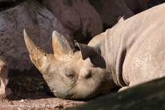 Zoo_Hannover_101014_copy_Heike_Weiler_IMG_7932