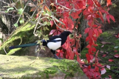 Zoo_Hannover_101014_copy_Heike_Weiler_IMG_7933