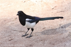 Zoo_Hannover_101014_copy_Heike_Weiler_IMG_7936