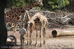 Zoo_Hannover_101014_copy_Heike_Weiler_IMG_7953