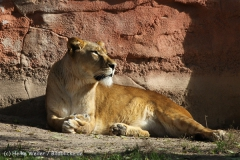 Zoo_Hannover_101014_copy_Heike_Weiler_IMG_7968