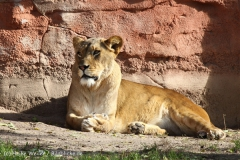 Zoo_Hannover_101014_copy_Heike_Weiler_IMG_7969