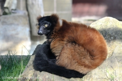 Zoo_Hannover_101014_copy_Heike_Weiler_IMG_7972