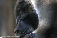 Zoo_Hannover_101014_copy_Heike_Weiler_IMG_7982