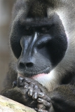 Zoo_Hannover_101014_copy_Heike_Weiler_IMG_7999