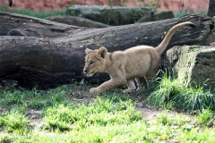 Zoo_Hannover_101014_copy_Heike_Weiler_IMG_8031