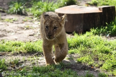 Zoo_Hannover_101014_copy_Heike_Weiler_IMG_8036