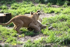 Zoo_Hannover_101014_copy_Heike_Weiler_IMG_8037