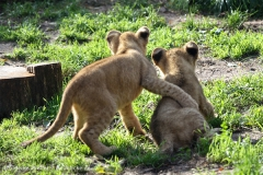 Zoo_Hannover_101014_copy_Heike_Weiler_IMG_8039
