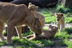 Zoo_Hannover_101014_copy_Heike_Weiler_IMG_8045
