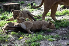 Zoo_Hannover_101014_copy_Heike_Weiler_IMG_8050
