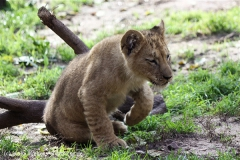 Zoo_Hannover_101014_copy_Heike_Weiler_IMG_8058
