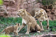 Zoo_Hannover_101014_copy_Heike_Weiler_IMG_8068