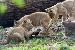 Zoo_Hannover_101014_copy_Heike_Weiler_IMG_8081