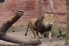 Zoo_Hannover_120412_IMG_6345