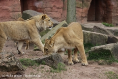 Zoo_Hannover_120412_IMG_6362