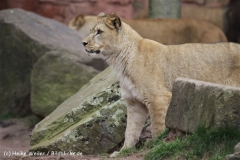 Zoo_Hannover_120412_IMG_6365