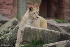 Zoo_Hannover_120412_IMG_6367