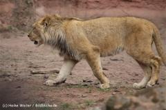 Zoo_Hannover_120412_IMG_6369