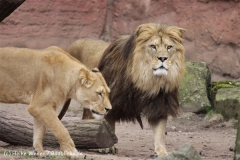 Zoo_Hannover_120412_IMG_6380
