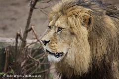 Zoo_Hannover_120412_IMG_6388