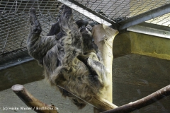 Zoo_Hannover_120412_IMG_6413