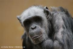 Zoo_Hannover_120412_IMG_6416