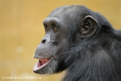 Zoo_Hannover_120412_IMG_6420
