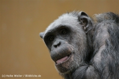 Zoo_Hannover_120412_IMG_6421