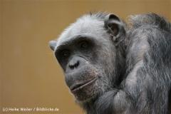 Zoo_Hannover_120412_IMG_6422