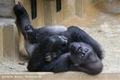 Zoo_Hannover_120412_IMG_6427