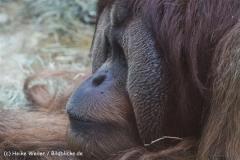 Zoo_Hannover_120412_IMG_6438