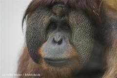 Zoo_Hannover_120412_IMG_6441