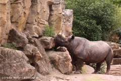 Zoo-Hannover-180610-IMG_3640