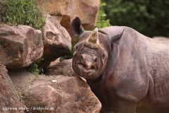 Zoo-Hannover-180610-IMG_3642