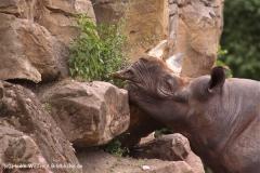 Zoo-Hannover-180610-IMG_3647