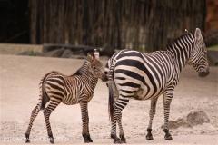 Zoo-Hannover-180610-IMG_3679