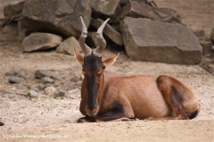 Zoo-Hannover-180610-IMG_3718